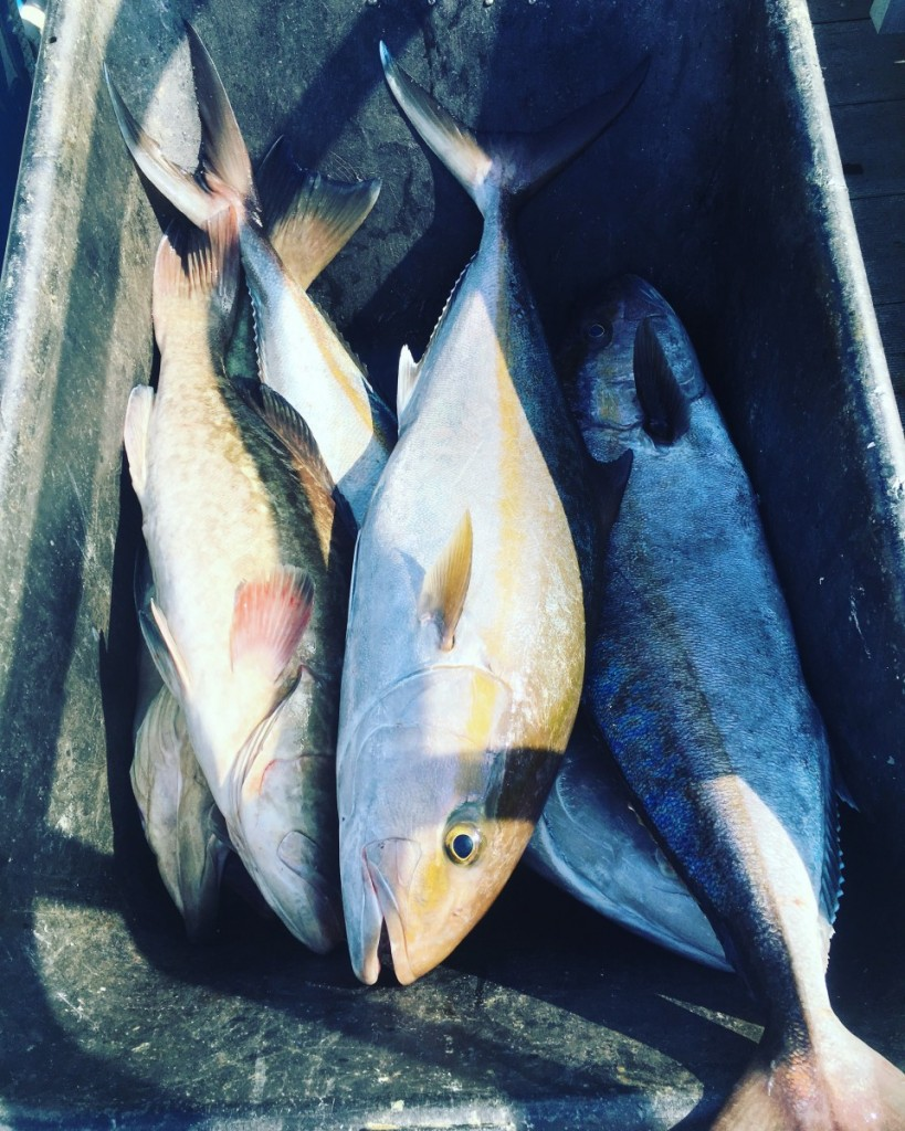 cocoa-beach-charter-fishing